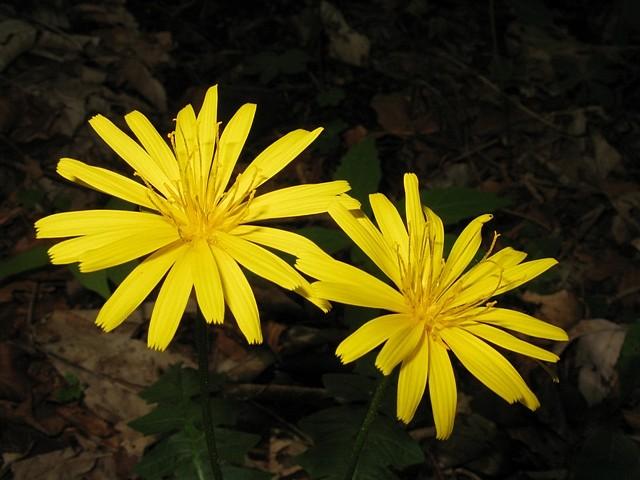 Fiore Giallo 6 Petali.Scheda Fiori Gialli Verdi Sei O Piu Petali